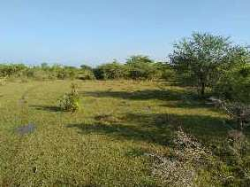 5 Acre Farm Land for Sale in Kuruvadipatti, Thanjavur