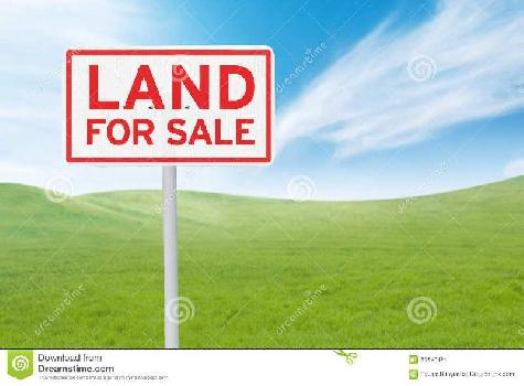 239 Sq. Yards Residential Plot for Sale in Sector 133 Noida