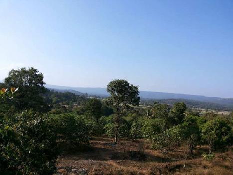 10 Acre Farm Land for Sale in Ajra, Kolhapur