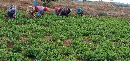 9900 Sq.ft. Farm Land for Sale in Melmaruvathur