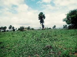 Farm Land for sale in Coimbatore   Buy/Sell Agricultural Farm Land