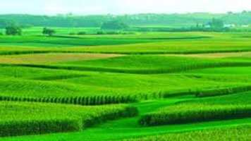 Farm Land for Sale in Bijwasan, South Delhi - 2.75 Acre