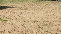 4 Acre Farm Land for Sale in Sohna Road, Gurgaon