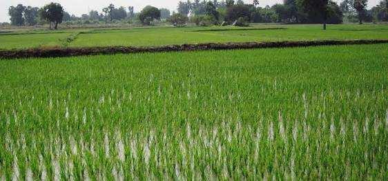 150 Bigha Farm Land for Sale in Tappal, Aligarh