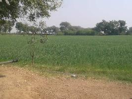 35 Acre Farm Land for Sale in Nakhatrana, Kutch