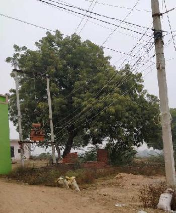 1500 Sq.ft. Residential Plot for Sale in Deen Dayal Nagar, Gwalior