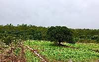 96921 Sq.ft. Farm Land for Sale in Magadi Road, Bangalore