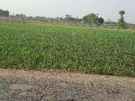 8 Bigha Farm Land for Sale in Gondal, Rajkot