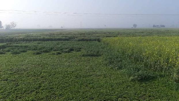 4 Acre Farm Land for Sale in Amloh, Fatehgarh Sahib