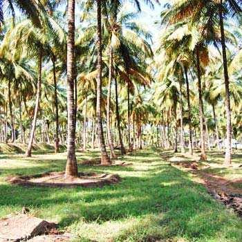 15 Acre Farm Land for Sale in Madampatti, Coimbatore