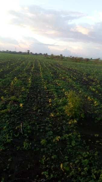 6 Acre Farm Land for Sale in Daryapur Banosa, Amravati