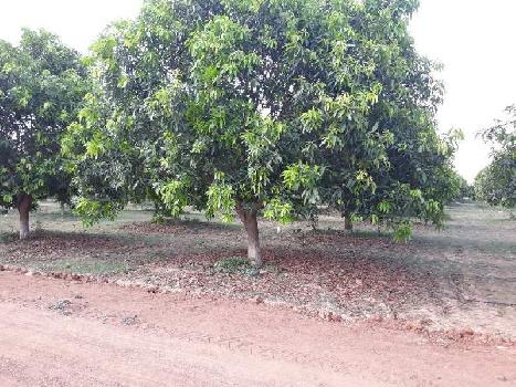 534 Sq. Yards Residential Plot for Sale in Thimmapur, Hyderabad