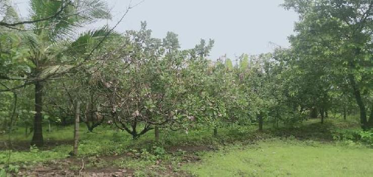 93 Guntha Farm Land for Sale in Malvan, Sindhudurg
