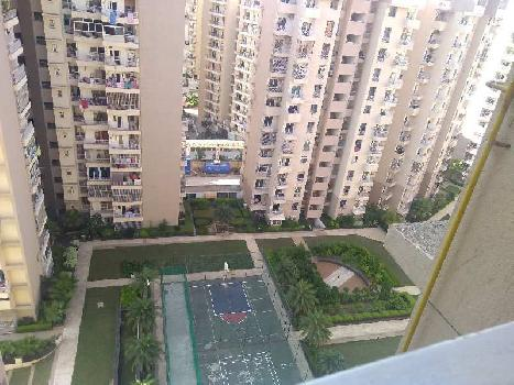 1 BHK 555 Sq.ft. Residential Apartment for Rent in Sector 137 Noida