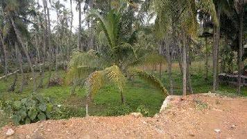 1.50 Acre Commercial Land for Sale in Thondayad, Kozhikode