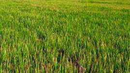 5 Acre Farm Land for Sale in Bhulath, Kapurthala