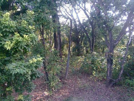 137 Ares Farm Land for Sale in Nagaon, Alibag, Raigad