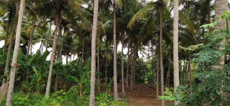 153 Cent Farm Land for Sale in Kulithalai, Karur