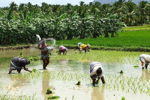 0 Acre Farm Land for Sale in Sunguvarchatram, Kanchipuram