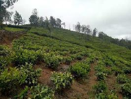 8.5 Acre Farm Land for Sale in Kotagiri, Ooty