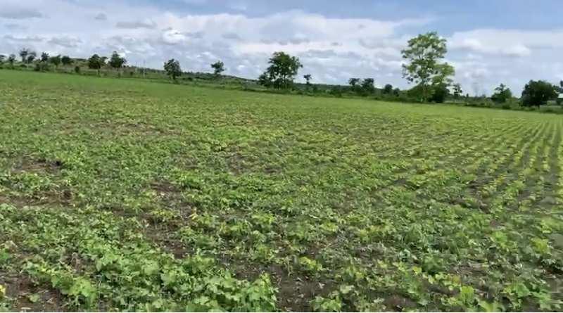 Farm Land for Sale in Teosa, Amravati