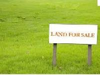 225 Bigha Farm Land for Sale in Jalor