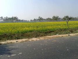 200 Acre Farm Land for Sale in Civil Lines, Budaun