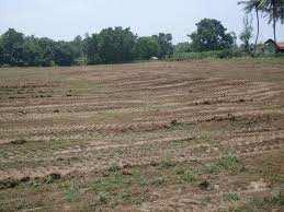 1800 Sq. Yards Residential Plot for Sale in Tunwala, Dehradun
