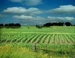 3 Bigha Farm Land for Sale in Patel Nagar, Muzaffarnagar