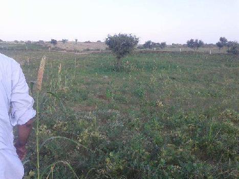 14 Bigha Farm Land for Sale in Chandwaji, Jaipur