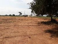 Farm Land for sale in Shad Nagar, Hyderabad | Buy/Sell Agricultural