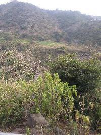 2.5 Bigha Farm Land for Sale in Morni Hills, Panchkula