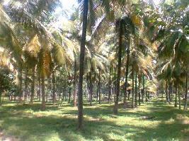 12 Cent Residential Plot for Sale in Payyannur, Kannur