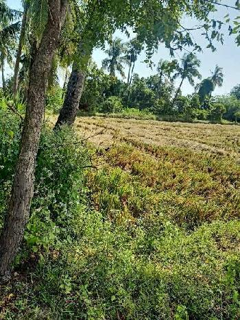 3 Acre Farm Land for Sale in Thavalakuppam, Pondicherry