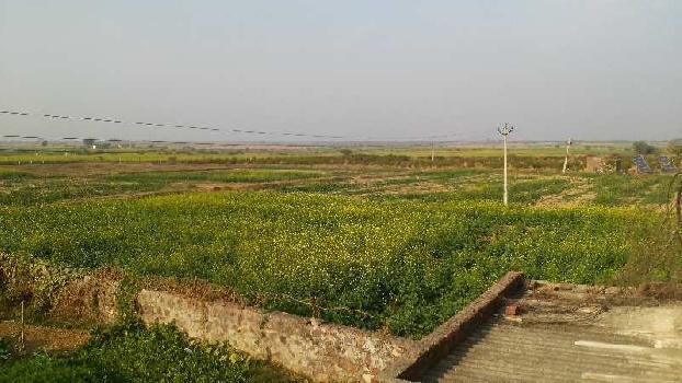 60 Bigha Farm Land for Sale in Lakheri, Bundi