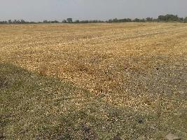 34 Bigha Farm Land for Sale in Nainwa, Bundi