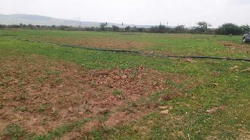 29 Bigha Farm Land for Sale in Nainwa, Bundi