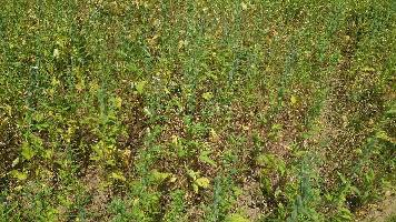 35 Bigha Farm Land for Sale in Nainwa, Bundi