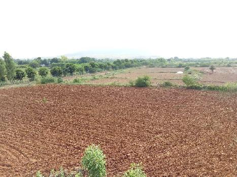 8 Bigha Farm Land for Sale in Gangapur City, Sawai Madhopur