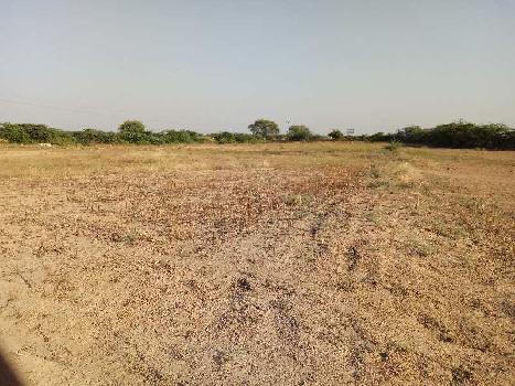 16 Bigha Farm Land for Sale in Gangapur City, Sawai Madhopur