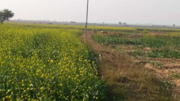 15 Bigha Farm Land for Sale in Kanera, Chittorgarh