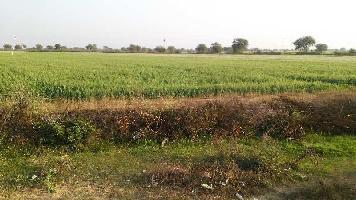 15 Bigha Farm Land for Sale in Lakheri, Bundi
