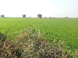 6 Bigha Farm Land for Sale in Lakheri, Bundi
