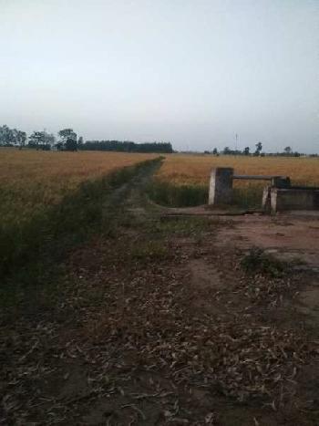 5 Acre Farm Land for Sale in Khamanon, Fatehgarh Sahib