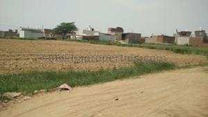 14 Acre Farm Land for Sale in Najafgarh Nangloi Road, Delhi