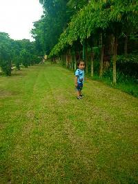 Farm Land for sale in Deoria   Buy/Sell Agricultural Land in